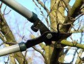 Каждая обрезанная ветка экономит силы дерева