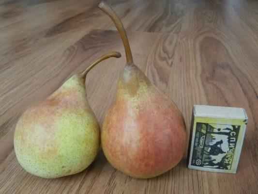 Плоды груши Виктория