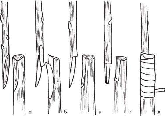 Схема выполнения копулировки