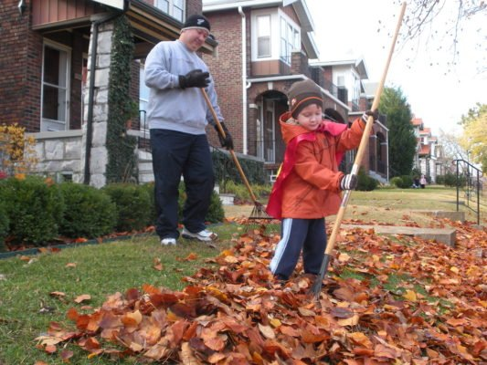 Сбор опавшей листвы