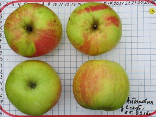 Яблоки Антоновка десертная