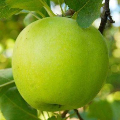 Яблоко Мутсу