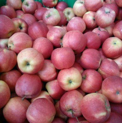Яблоки Гала Роял