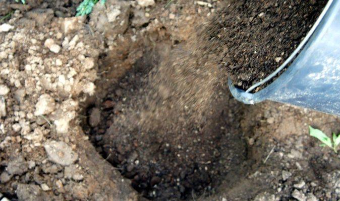 земля из ведра засыпается в яму