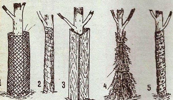 схема укрытий деревьев от мороза
