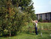 обработка яблони