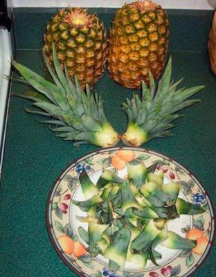 Верхушки ананасов