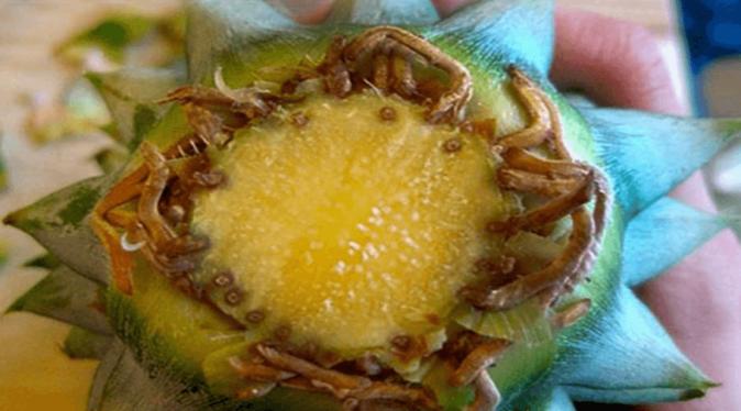 Корешки из верхушки ананаса