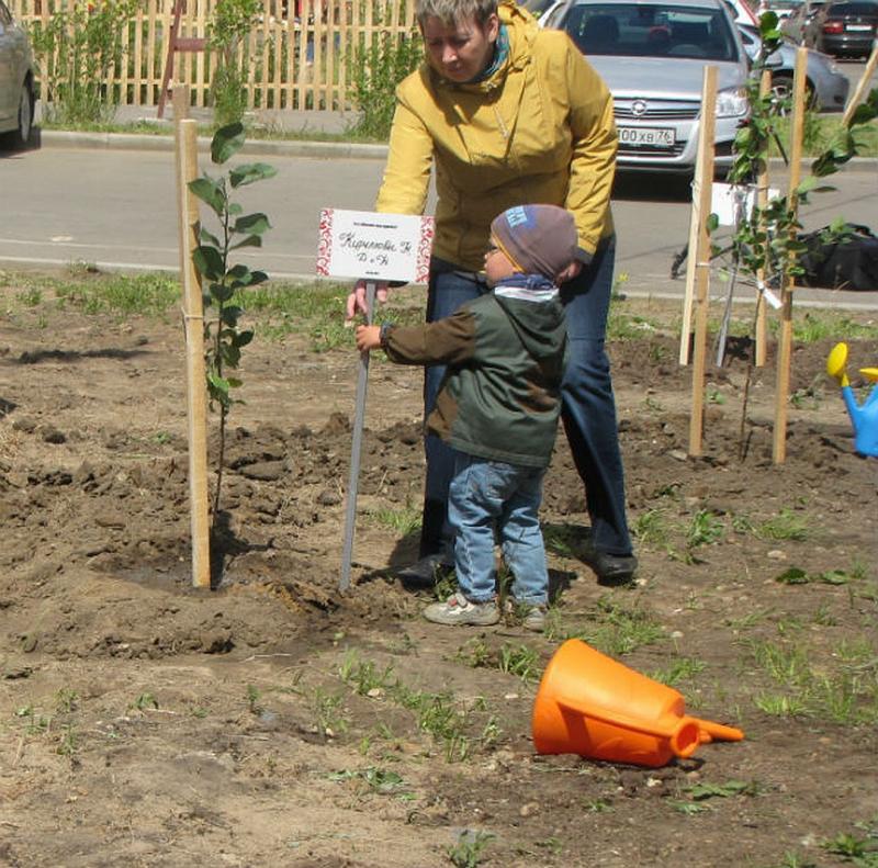 Как правильно посадить яблоню весной, в том числе посадка саженцами, пошаговое руководство, схема, инструкция, как сажать на Украине видео