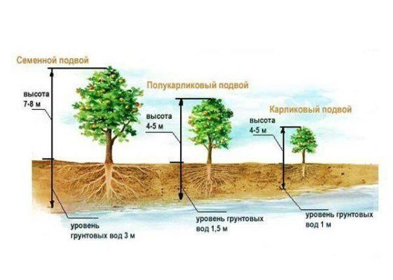 Схема посадки яблонь в зависимости от глубины грунтовых вод