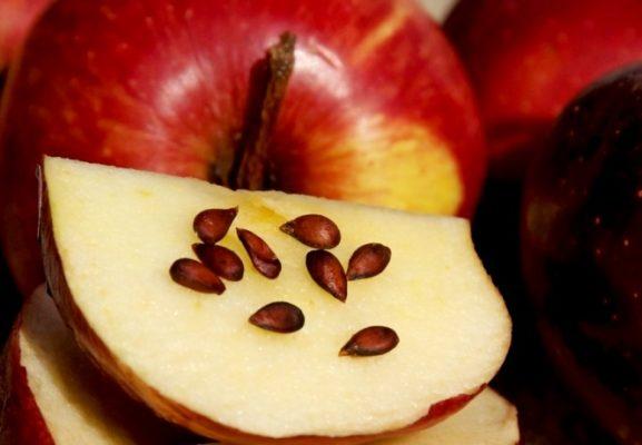 Семена яблока