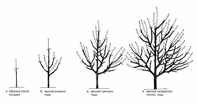 Чёрно-белый рисунок обрезки дерева