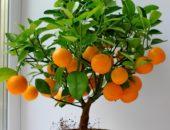 Апельсин на подоконнике