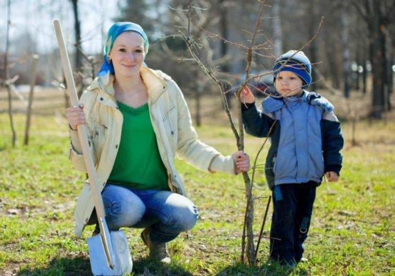 сажать дерево с ребенком
