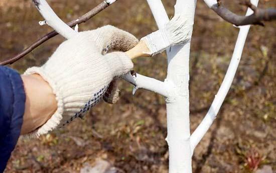 Известковая побелка дерева