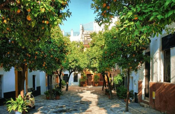 Апельсиновые деревья в Испании