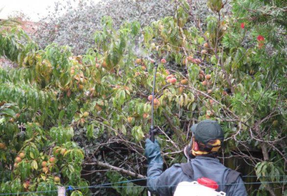 Опрыскивание персика