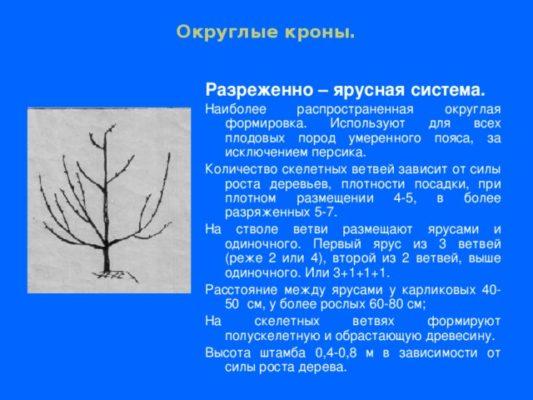Схема разреженно-ярусной формировки плодовых деревьев