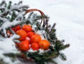 мандарины на снегу