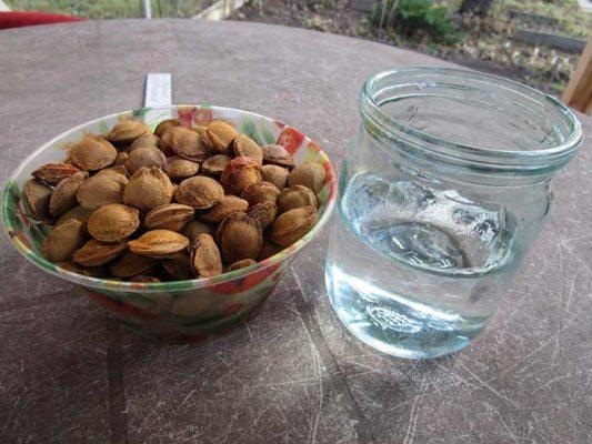 Косточки абрикоса и банка с водой