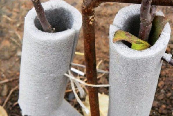 Защита дерева на зиму