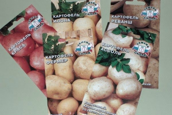 Семена разных сортов картофеля