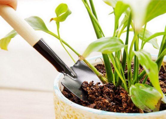 Рыхление почвы в цветочном горшке