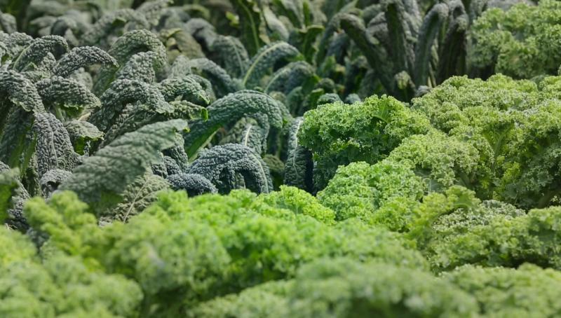 Выращивание капусты Кале и ее полезные свойства видео