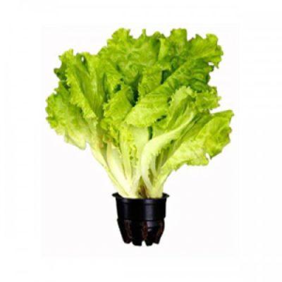 Салат в стаканчике