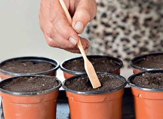 Посев капусты