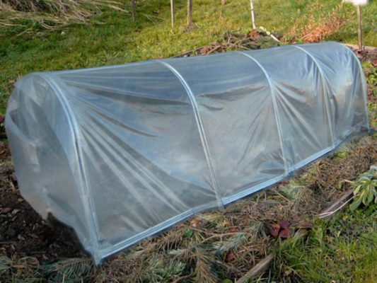 Защита посевов цветной капусты