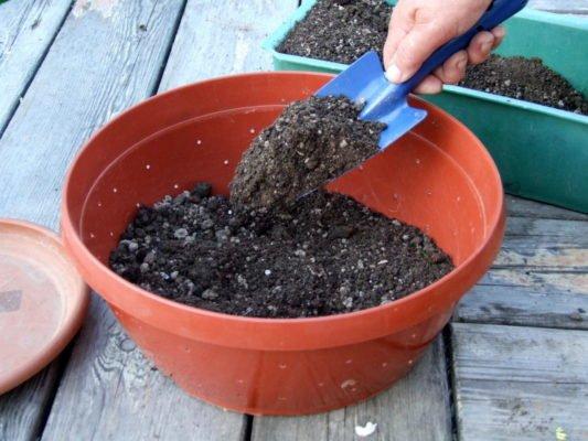 Почвогрунт для рассады капусты