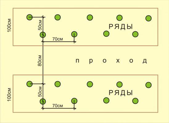 Схема посадки арбузов в теплице