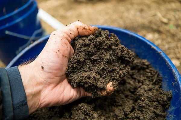 Подготовка почвы для посева кинзы