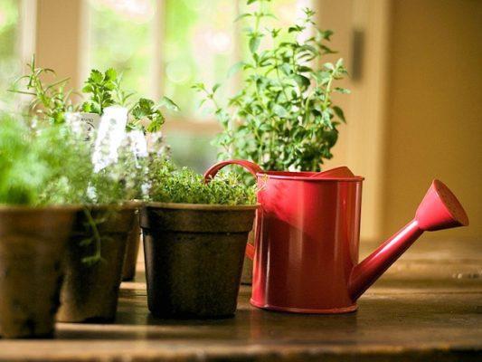 Уход за зеленью в домашних условиях