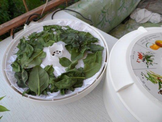 Сушка листьев шпината