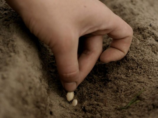 Высадка семян непосредственно в грунт