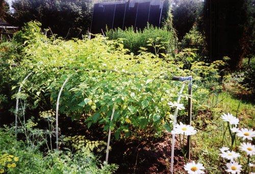 Подходящее место для выращивания физалиса