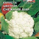 Сорт цветной капусты Снежный шар