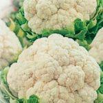 Сорт цветной капусты Скороспелка