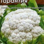 Сорт цветной капусты Гарантия