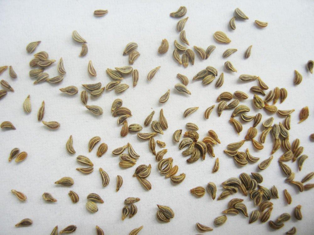 Петрушка семена от простатита свечи от простатита и проктита