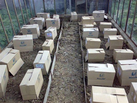 Укрытие рассады картонными коробками