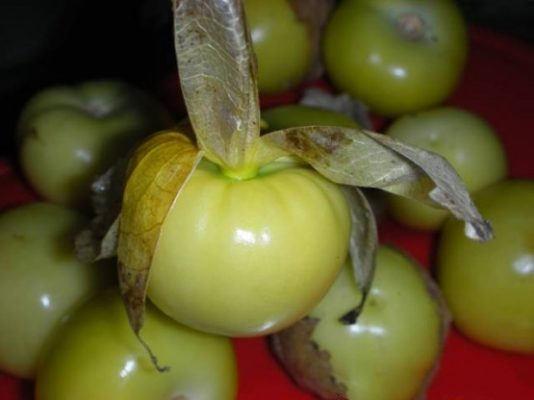 Плоды-ягоды овощного физалиса