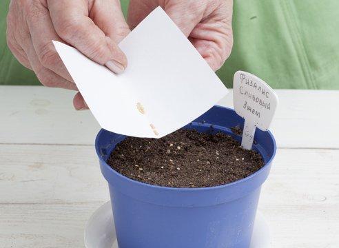 Распределение семян по поверхности грунта