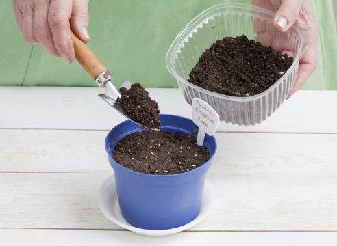 Засыпка семян физалиса почвосмесью