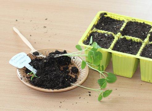 Кассеты с почвосмесью, готовые к высадке рассады