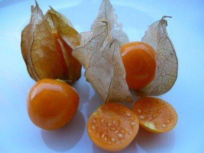 Созревшие плоды физалиса