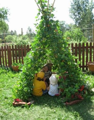 Один из видов опоры для вьющихся растений