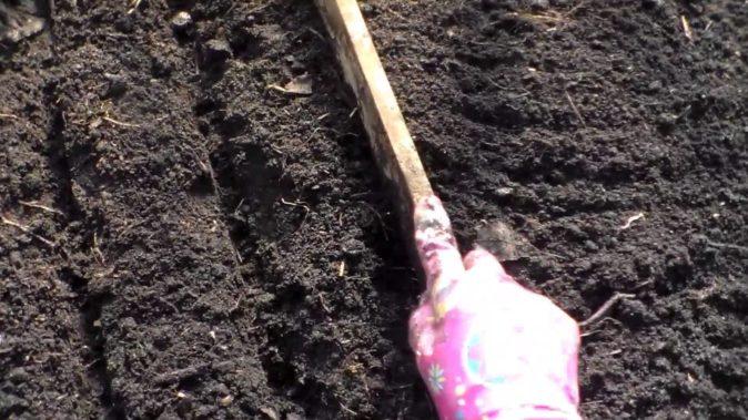 Подготовка борозд для посева свёклы